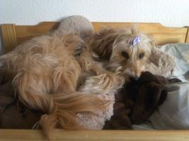 Foto 2 Junge Hundedame sucht neues ZuHause