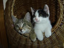Foto 5 Junge Kätzchen