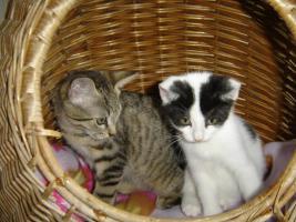 Foto 8 Junge Kätzchen