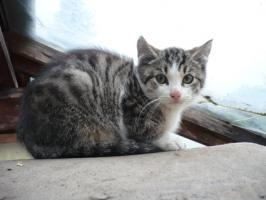 Junge Kätzchen suchen Menschen mit Herz und Verstand,  D-weit