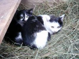 Foto 2 Junge Kätzchen suchen Menschen mit Herz und Verstand,  D-weit