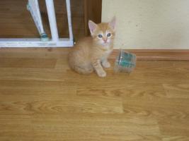 Foto 2 Junge Kätzchen suchen neuen Dosenöffner