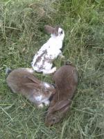 Foto 2 Junge Kaninchen