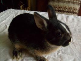 Foto 2 Junge Kanninchen abzugeben.