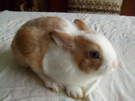 Foto 3 Junge Kanninchen abzugeben.