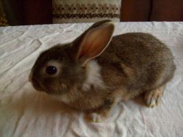 Foto 4 Junge Kanninchen abzugeben.