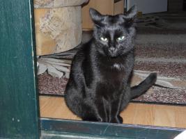 Junge Katze Musja sehr lieb, süß und verschmust sucht ein Neues Zuhause