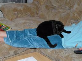 Foto 2 Junge Katze Musja sehr lieb, süß und verschmust sucht ein Neues Zuhause