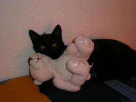 Junge Katze abzugeben !