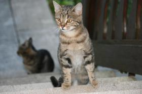Foto 2 Junge Katzen