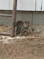 Foto 2 Junge Katzen abzugeben