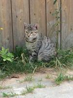 Foto 3 Junge Katzen abzugeben