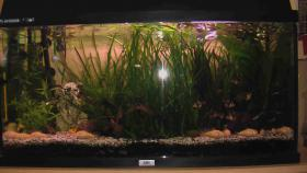 Foto 2 Juwel 110 Aquarium mit Unterschrank