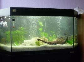 Juwel Aquarium 260l Becken