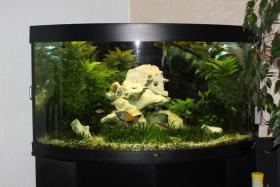Juwel Aquarium (Triagon 350) Schwarz