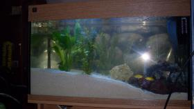 Juwel Aquarium zu Verkaufen oder Tausch gegen Terrarium
