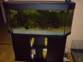 Juwel Aquarium incl. Zubeh�r