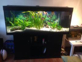 Foto 2 Juwel Rio 400 Aquarium