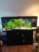 Foto 3 Juwel Rio 400 Aquarium