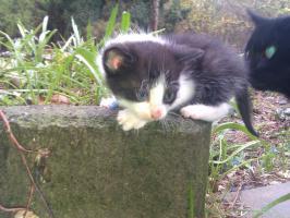 Foto 3 Kätzchen Auf Wohnungssuche