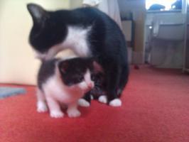 Foto 4 Kätzchen Auf Wohnungssuche