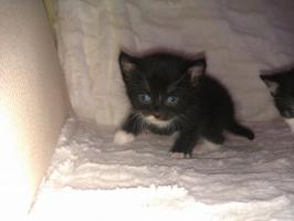 Foto 5 Kätzchen Auf Wohnungssuche