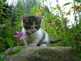 Foto 6 Kätzchen Auf Wohnungssuche