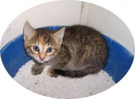 Foto 2 ~~~Kätzchen sucht ein liebevolles zu hause~~~