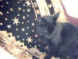 Foto 2 Kätzchen sucht ein neues Zuhause...