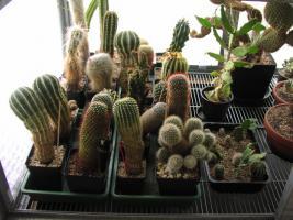 Kakteensammlung, ca. 85 Pflanzen