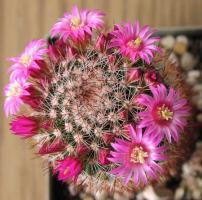 Foto 7 Kakteensammlung, ca. 85 Pflanzen