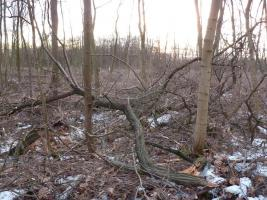 Kaminholz Feuerholz Brennholz Wild aus Privatforst