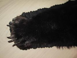 Foto 4 Kanadischer Schwarzbär