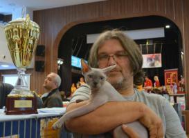 Foto 3 Kanadischer Sphynx Kätzchen für Zucht mit Papiere
