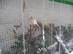 Foto 5 Kanarien ca. 30 St�ck mit div. Zubeh�r