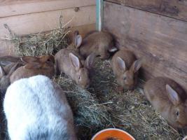 Foto 2 Kanienchen