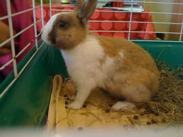 Foto 3 Kaninchen