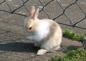 Kaninchen-Jungtiere mit blauen Augen