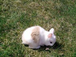 Foto 3 Kaninchen-Jungtiere mit blauen Augen