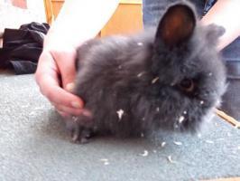 Kaninchen abzugeben!