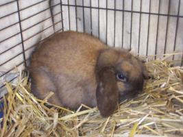 Kaninchen abzugeben in 67346 Speyer