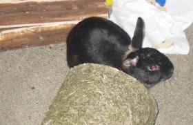 Foto 3 Kaninchen sucht eine neue Heimat