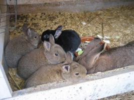 Kaninchen - Mix