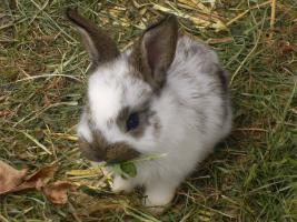 Kaninchenbabies zu verschenken