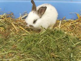 Foto 2 Kaninchenbabies zu verschenken