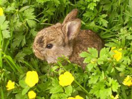 Foto 3 Kaninchenbabies zu verschenken