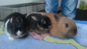 Foto 2 Kaninchenbabys
