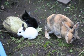 Kaninchenbabys abzugeben