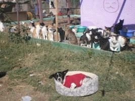Kann Ihre Katze etwas f�r rum�nische Katzen abgeben?