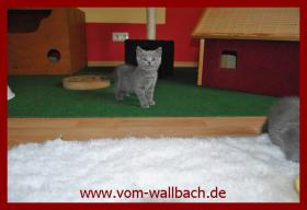 Foto 3 Kart�user Katzenm�dchen aus rein blauen Linien.